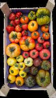 tomatescaissette