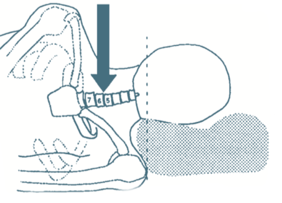 oreiller douleurs cervicales Douleurs cervicales : l'oreiller orthopédique à la rescousse  oreiller douleurs cervicales